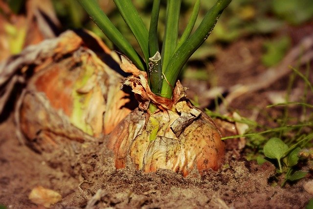 Keeping Your Garden Safe From Pests